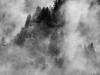 paolo-bongianino-nebbia-sui-pini-1-2012